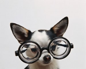 Funny-Puppy-Doggy-Glasses